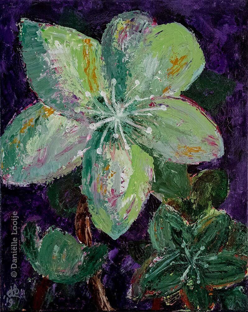 Schilderij van een helleborus met paars